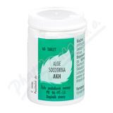 Aloe socotrina AKH por.tbl.60